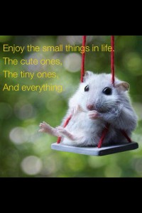 Enjoy-the-small-things